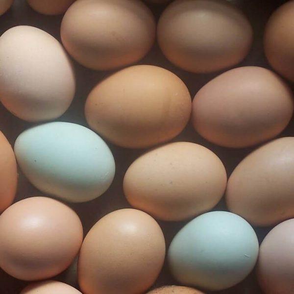 Eggs in bulk