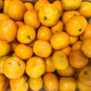 Mandarins in bulk